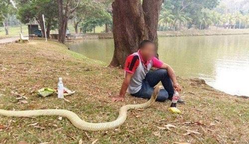 Sống chung với rắn hổ mang vì nghĩ là bạn gái chuyển kiếp - 6