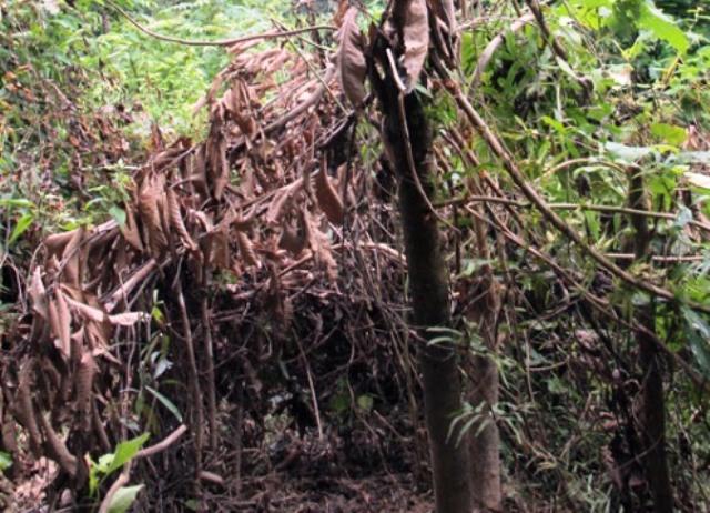 Phát hiện thi thể người đàn ông phân hủy trong rừng - 1