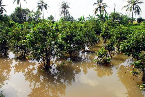 Vỡ bờ bao ven sông Sài Gòn, nhiều người dân trắng tay - 6