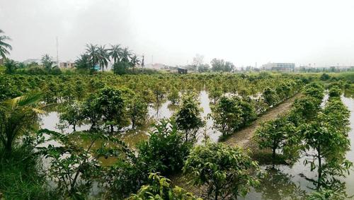 Vỡ bờ bao ven sông Sài Gòn, nhiều người dân trắng tay - 7