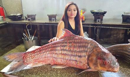 Cặp cá sọc dưa khổng lồ, nặng gần 100kg mắc lưới ngư dân - 1