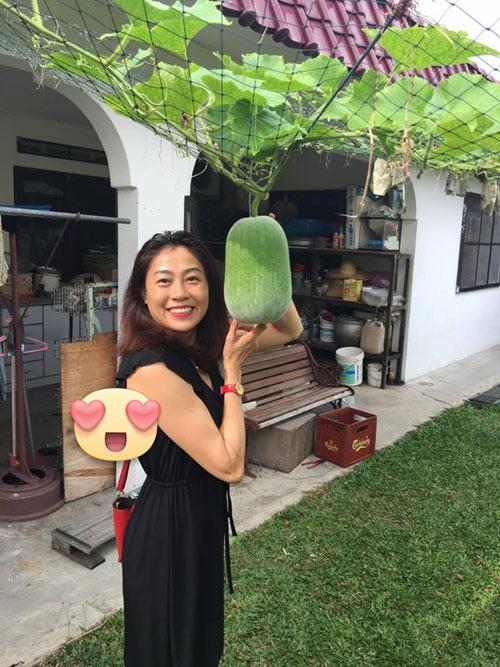 Phát thèm với vườn cây trái sai lúc lỉu của bà mẹ Việt kiều - 1