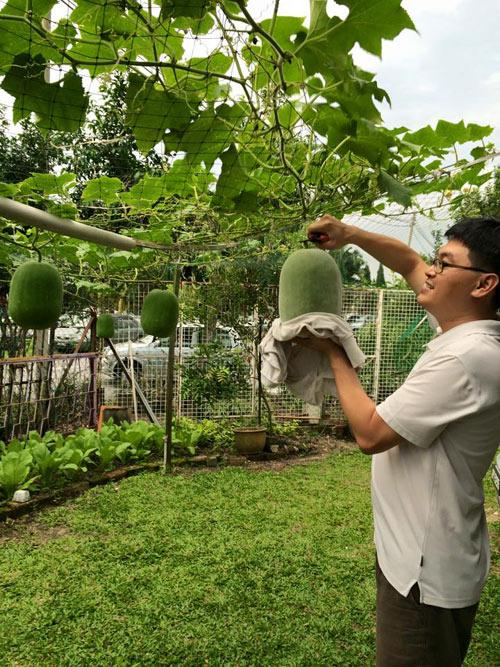 Phát thèm với vườn cây trái sai lúc lỉu của bà mẹ Việt kiều - 8