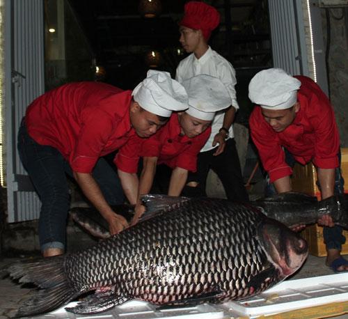 """""""Tứ quý"""" cá khủng từ sông Mê Kông """"bơi"""" về Hà Nội - 5"""