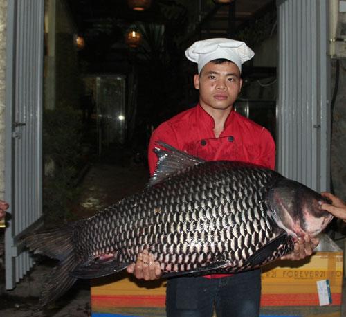 """""""Tứ quý"""" cá khủng từ sông Mê Kông """"bơi"""" về Hà Nội - 4"""