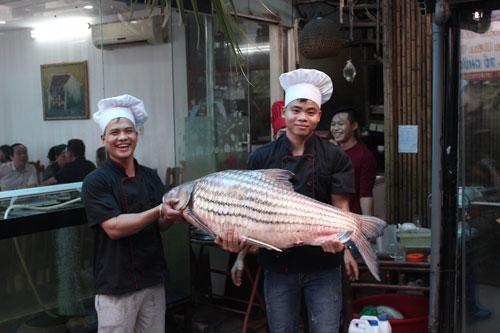 """""""Tứ quý"""" cá khủng từ sông Mê Kông """"bơi"""" về Hà Nội - 1"""