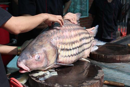 """""""Tứ quý"""" cá khủng từ sông Mê Kông """"bơi"""" về Hà Nội - 2"""