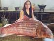 Cặp cá sọc dưa khổng lồ, nặng gần 100kg mắc lưới ngư dân