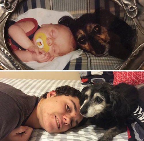 Cảm động hình ảnh chú chó và chủ cùng nhau lớn lên - 2