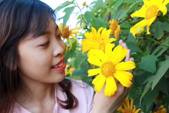Lâm Đồng vàng óng sắc hoa dã quỳ dưới nắng đầu đông - 10