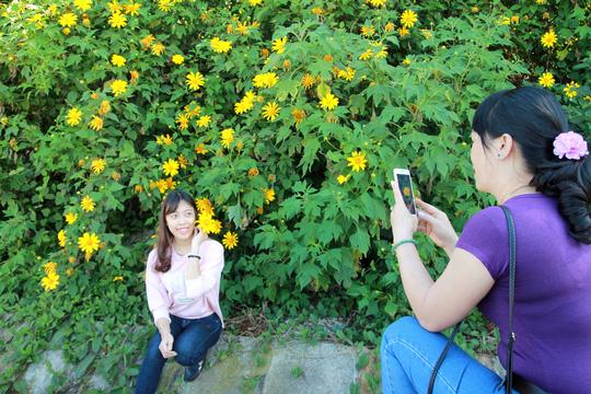 Lâm Đồng vàng óng sắc hoa dã quỳ dưới nắng đầu đông - 6