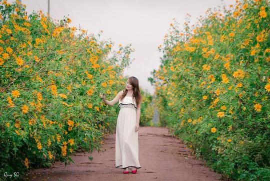 Lâm Đồng vàng óng sắc hoa dã quỳ dưới nắng đầu đông - 7