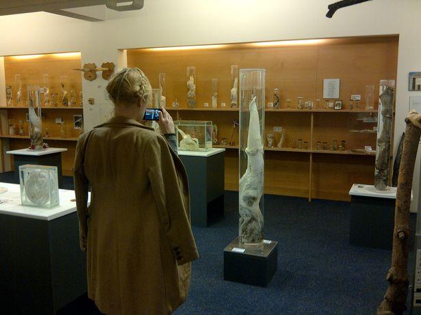"""Đến thăm bảo tàng """"của quý"""" lớn nhất thế giới ở Iceland - 4"""