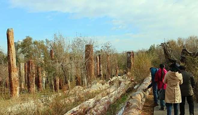 TQ: Phát hiện cây hóa thạch dài 56m phá kỉ lục thế giới? - 2
