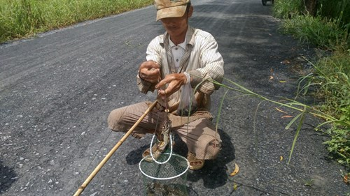 Ngoại ô Sài Gòn vào mùa câu ếch, bẫy chim - 2
