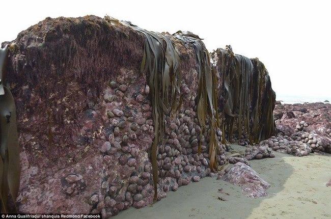 Động đất kéo đáy biển lên cao 2m ở New Zealand - 1
