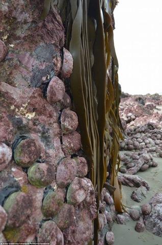 Động đất kéo đáy biển lên cao 2m ở New Zealand - 2