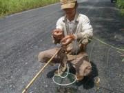 Tin tức trong ngày - Ngoại ô Sài Gòn vào mùa câu ếch, bẫy chim