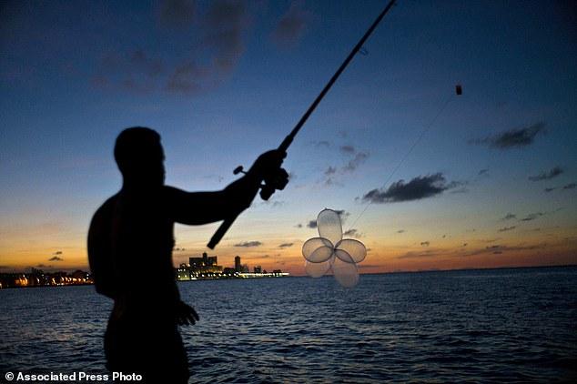 Cuba: Dùng bao cao su bắt cá ngừ bạc triệu - 2