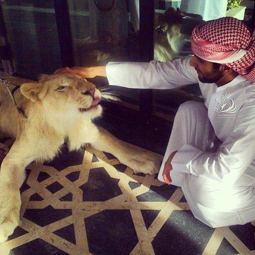 Thú vui chơi xa xỉ của Thái tử đẹp trai nhất Dubai - 6