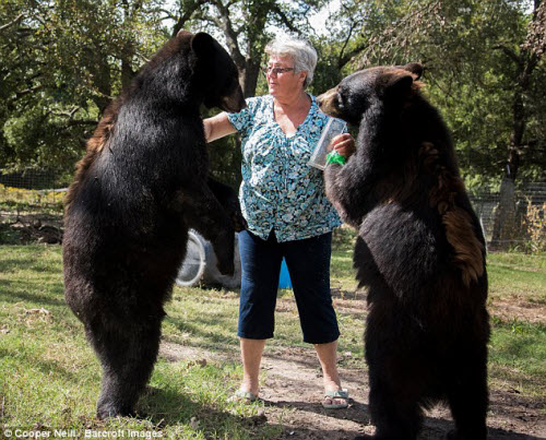 Góa phụ một mình sống chung với gấu và hổ dữ - 1