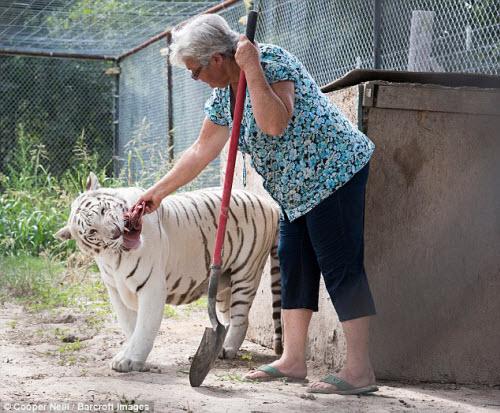 Góa phụ một mình sống chung với gấu và hổ dữ - 2