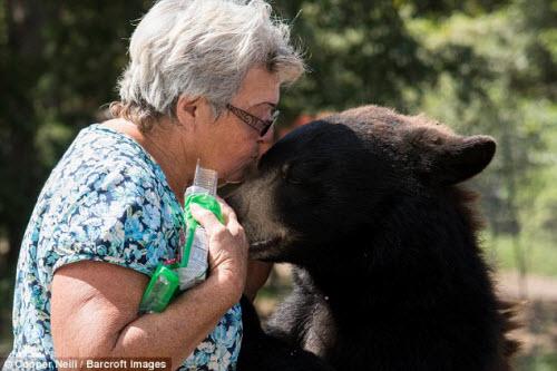 Góa phụ một mình sống chung với gấu và hổ dữ - 3
