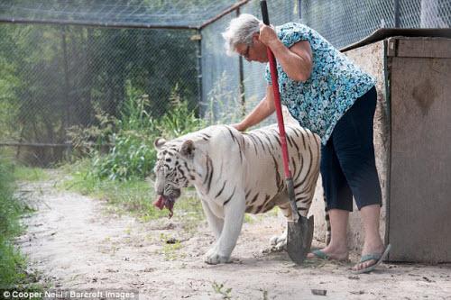 Góa phụ một mình sống chung với gấu và hổ dữ - 5