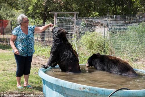 Góa phụ một mình sống chung với gấu và hổ dữ - 9