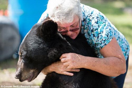 Góa phụ một mình sống chung với gấu và hổ dữ - 10