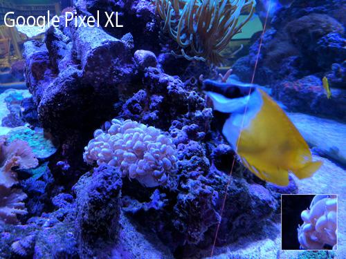 Camera của Google Pixel XL đọ tài cùng iPhone 7 Plus - 16