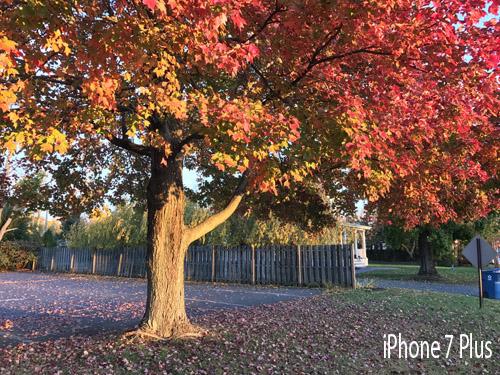 Camera của Google Pixel XL đọ tài cùng iPhone 7 Plus - 23