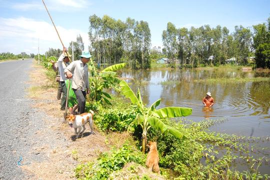 Về miền Tây xem chó săn chuột đồng mùa nước nổi - 1