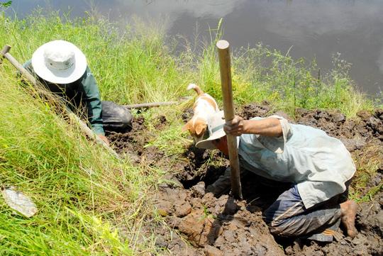 Về miền Tây xem chó săn chuột đồng mùa nước nổi - 2