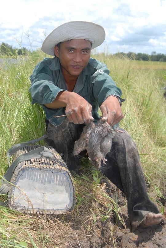 Về miền Tây xem chó săn chuột đồng mùa nước nổi - 4