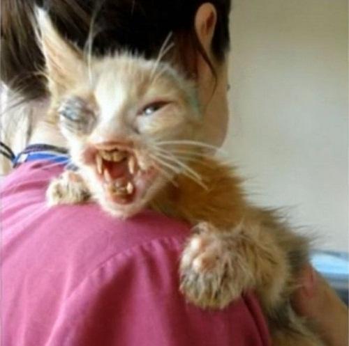 Chú mèo xấu xí lột xác nhờ phẫu thuật thẩm mỹ - 3