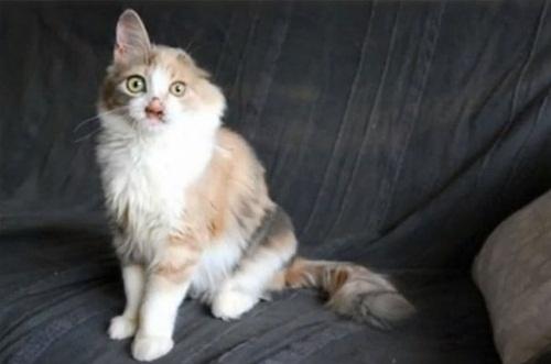 Chú mèo xấu xí lột xác nhờ phẫu thuật thẩm mỹ - 6