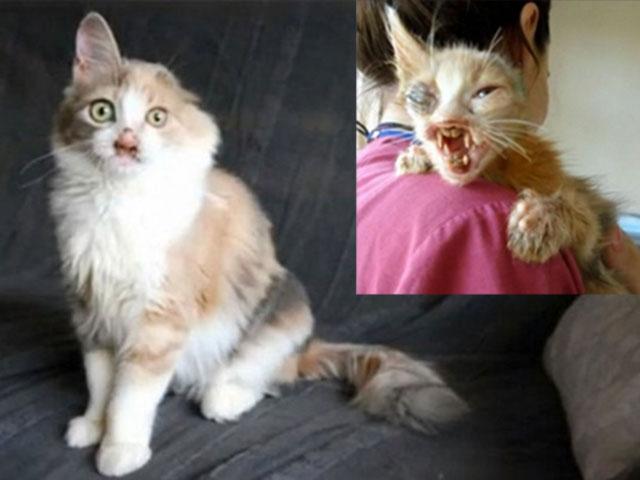 Chú mèo xấu xí lột xác nhờ phẫu thuật thẩm mỹ - 1