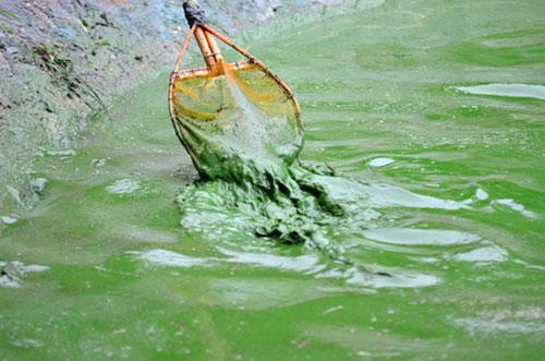 """Sông hồ Hà Nội: Những """"lá phổi"""" chết giữa Thủ đô - 6"""