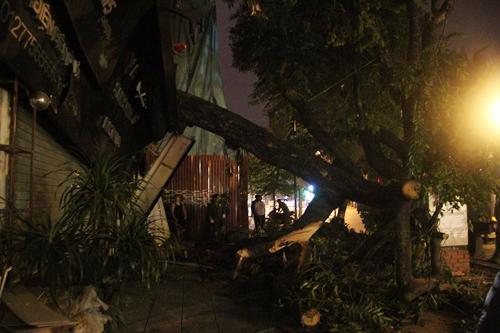 Hà Nội: Cây cổ thụ bất ngờ đổ vào nhà dân trong đêm - 1