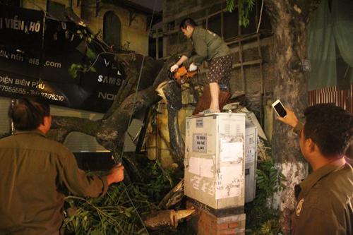 Hà Nội: Cây cổ thụ bất ngờ đổ vào nhà dân trong đêm - 4