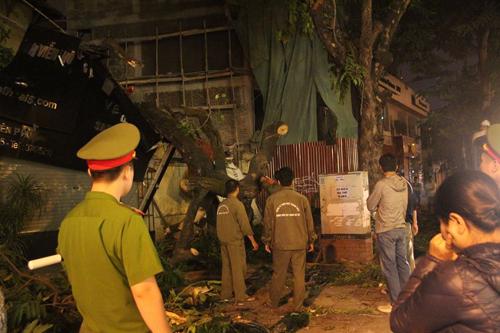 Hà Nội: Cây cổ thụ bất ngờ đổ vào nhà dân trong đêm - 5