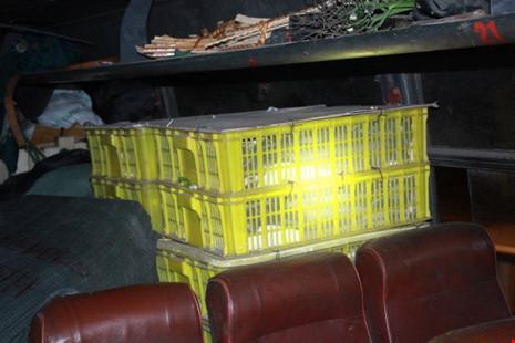 Phát hoảng vì hơn trăm con rắn hổ mang trên xe khách - 1