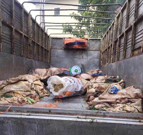 Bắt xe tải vận chuyển hơn 3 tấn nội tạng, da bò thối ra Hà Nội - 1