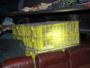 Tin tức trong ngày - Phát hoảng vì hơn trăm con rắn hổ mang trên xe khách