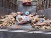 Thị trường - Tiêu dùng - Bắt xe tải vận chuyển hơn 3 tấn nội tạng, da bò thối ra Hà Nội
