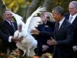 Ông Obama xá tội gà tây lần cuối cùng ở Nhà Trắng