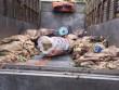 Bắt xe tải vận chuyển hơn 3 tấn nội tạng, da bò thối ra Hà Nội