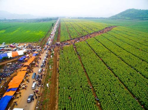 Lễ hội hoa hướng dương lần đầu tiên tại Nghệ An - 2