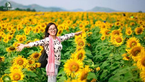 Lễ hội hoa hướng dương lần đầu tiên tại Nghệ An - 1